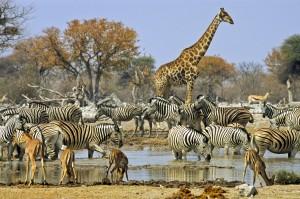 Bathing safari animals